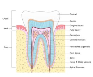 Myths about root canal